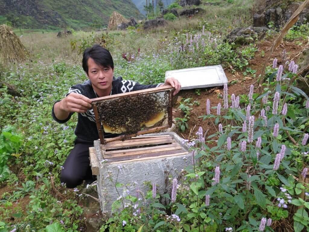 Nếu thời tiết thuận lợi, hoa phát triển mạnh thì ong sẽ có nhiều thức ăn