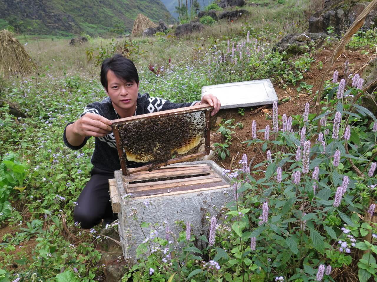 yếu tố ảnh hưởng tới chất lượng mật ong bạc hà