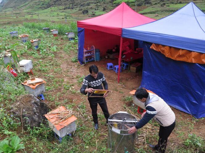 Cuộc sống du mục thu hoạch mật ong bạc hà