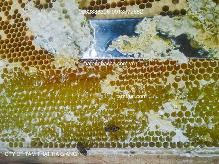 Mật ong bạc hà nguyên chất dạng nguyên sáp