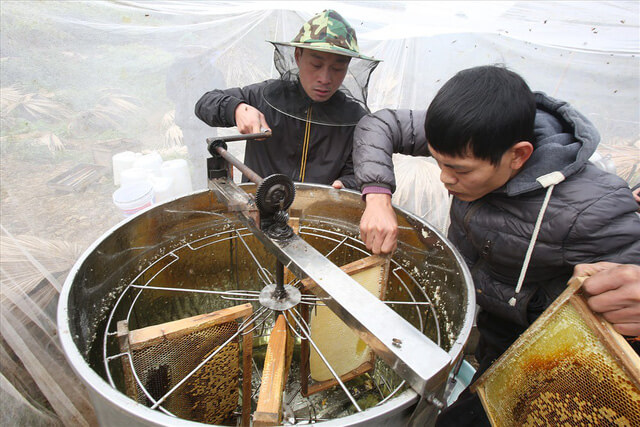 Giá bán mật ong bạc hà xịn có rẻ không