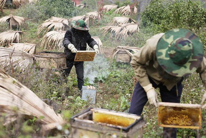 Sáp ong chứa đầy mật ong bạc hà trong khung