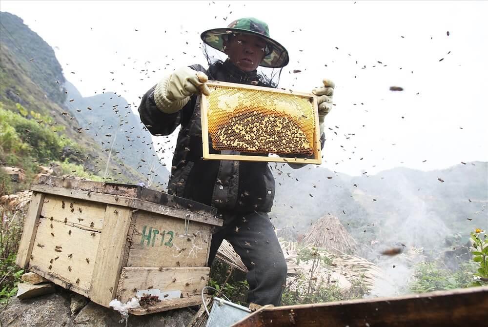 Những khung mật đầy ắp mật ong bạc hà