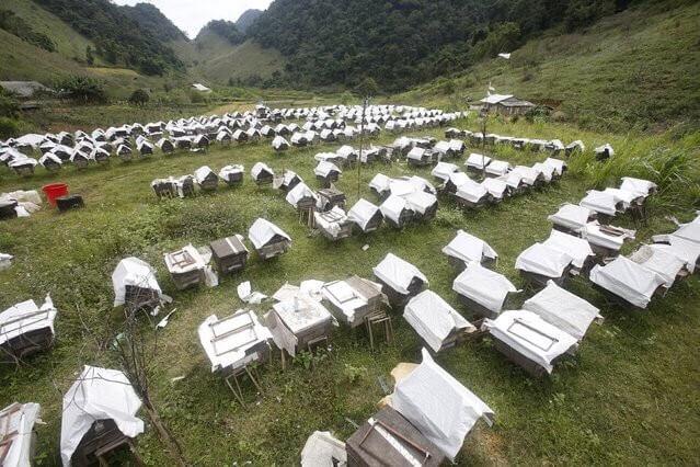Ngành nuôi ong bạc hà phụ thuộc rất nhiều vào thời tiết, tự nhiên
