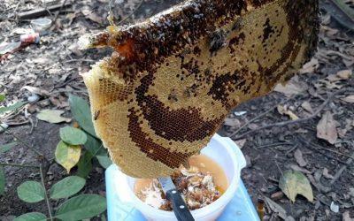 Địa chỉ bán mật ong anh túc