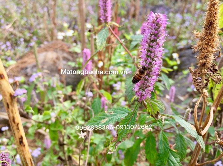 Thời tiết thuận lợi hoa sẽ tiết nhiệu mật, tạo nguồn thức ăn dồi dào cho ong