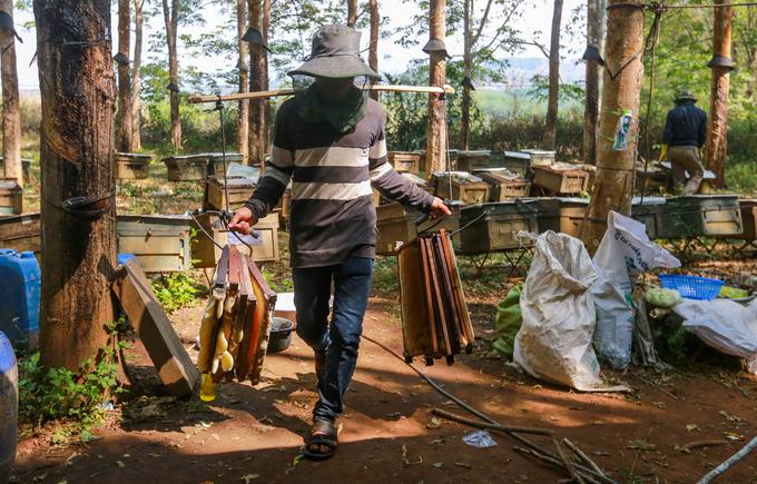 Công tác di cư ong từ rừng đi nơi khác