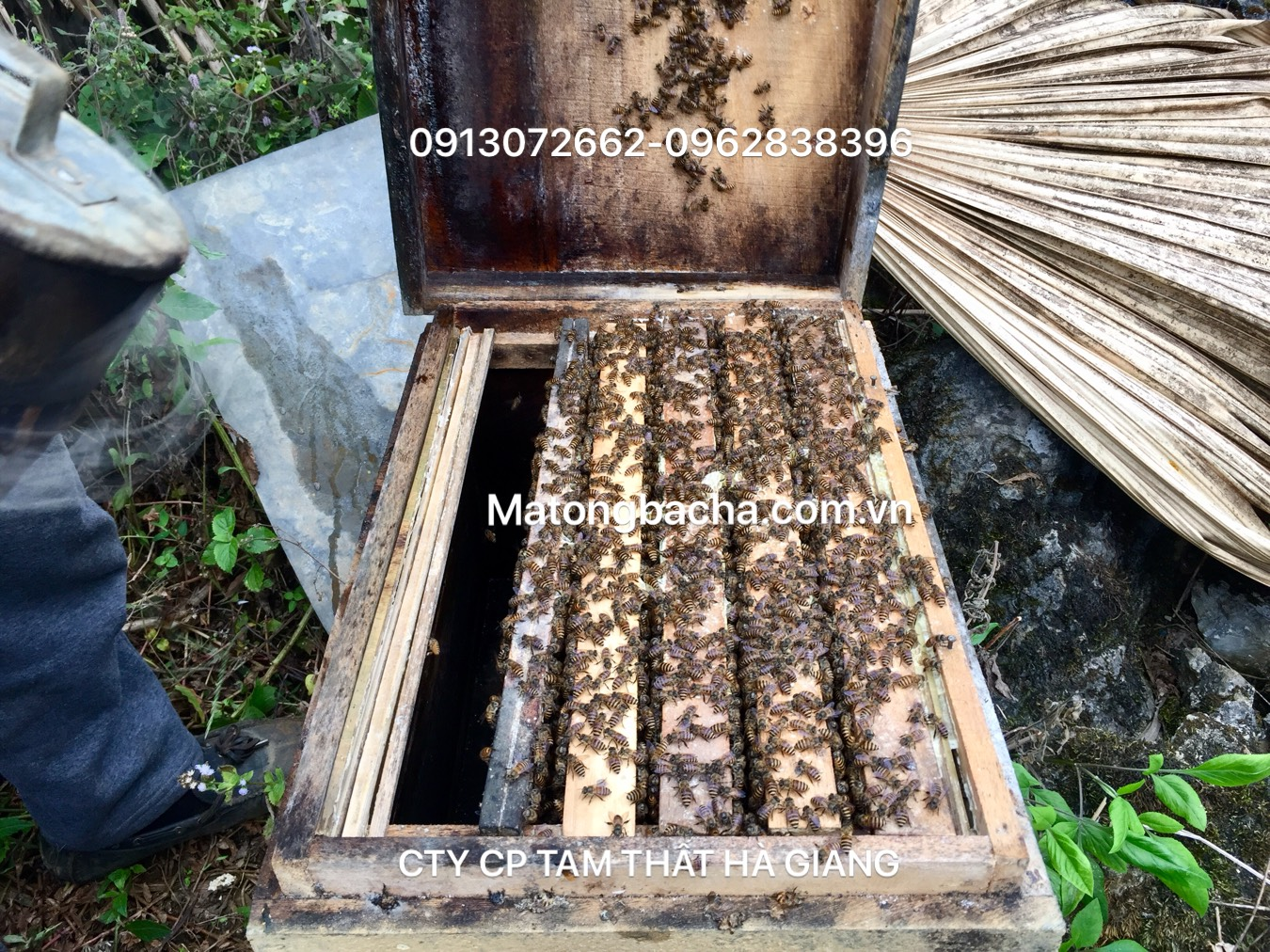 Ong nội được người dân bản địa nuôi từ lâu đời