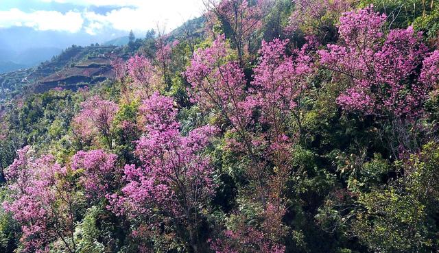 Hoa rừng nở rộ là nguồn thức ăn dồi dào cho cho những đàn ong.