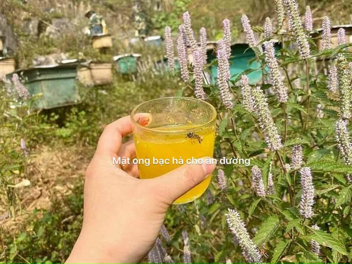 Mật ong bạc hà nuôi đường có màu đục, không hương, ngọt sắt.