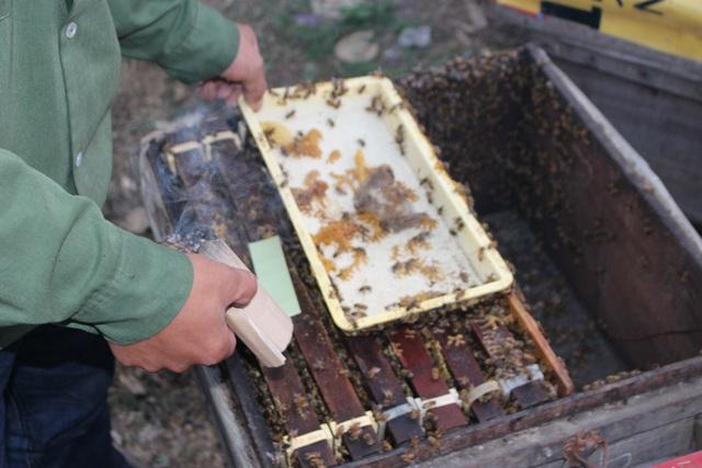 Khi ong thiếu nguồn thức ăn, người nuôi phải bổ xung cho ong ăn thêm đường.